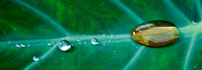 Ecosostenibilità Rispetto dell'ambiente